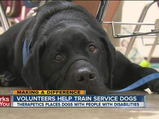 Making a Difference: Teen girl trains dog for the disabled
