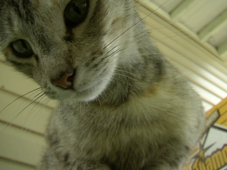 Collinsville daughter inherits 27 cats
