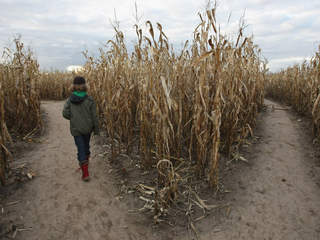 : Background checks unenforced for haunted houses, corn mazes