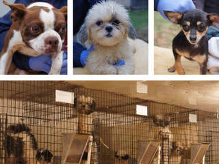 70 pets available at patriotic adoption event