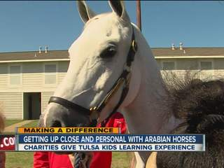Making a Difference: Arabian horses
