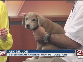 Pet of the week: Beagle pup Rusty