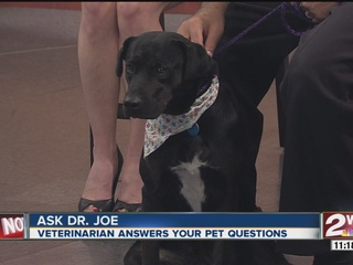 Pet of the week: Missy, a 2-year-old lab mix