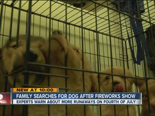Family searches for dog frightened by fireworks