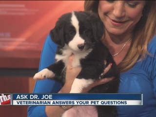 Pet of the week: Junior, collie/spaniel mix