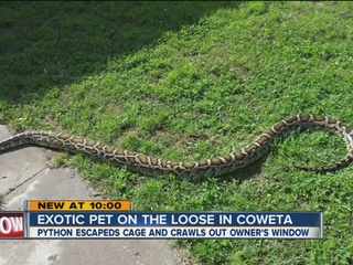 Large python on the loose in Coweta neighborhood