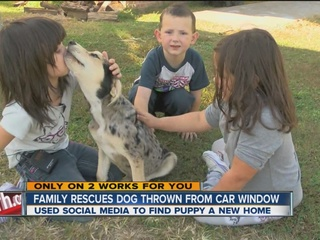 Puppy thrown from car window finds new home