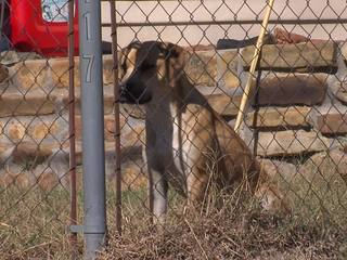 Neighbors upset after they say shot dog suffers