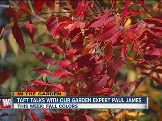 Paul James and Fall's beautiful colors