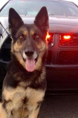 Retired Bville K-9 ofc. passes away