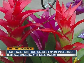 Paul James' New Year's gardening resolutions