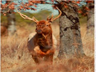 Reward raised for information on elk killing