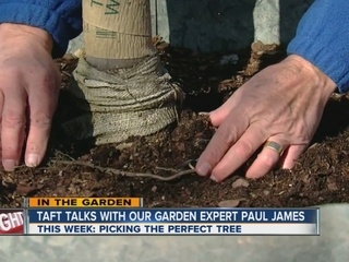 Paul James talks about picking the perfect tree