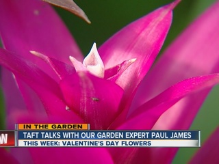 Paul James' alternatives to Valentine's roses