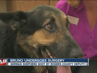 Dog shot by deputy recovering after surgery