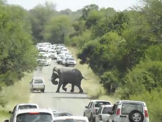 VIDEO: Elephant causes standoff; charges truck