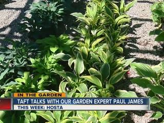 Paul James explains why he likes hostas