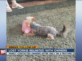 Scout the Yorkie returned to home in Claremore