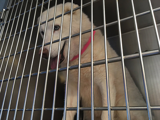More than 60 pets rescued, found in woman's home