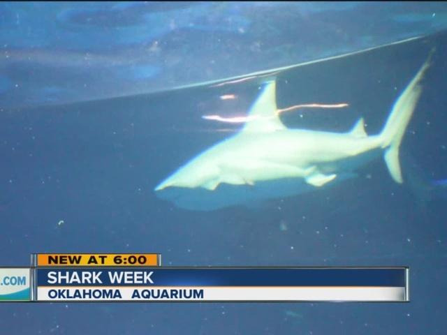Oklahoma Aquarium Hosts Shark Week