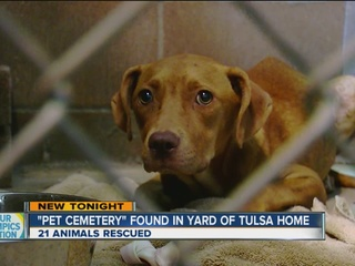 Man arrested for abusing nearly 20 animals
