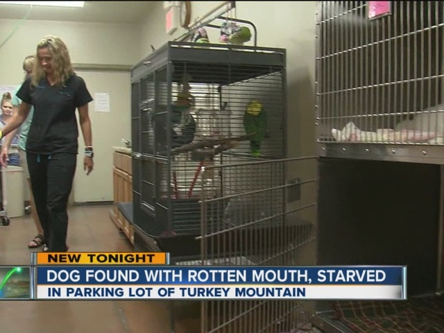 Dog found with rotten mouth, starved at Turkey Mountain