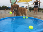 PHOTOS: Dogs take to the pool for Pooch Plunge