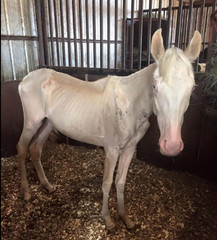 Rescue group says horse is recovering well
