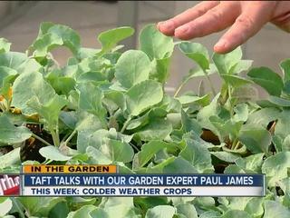 Paul James: 'Cool season' transplants and herbs