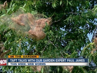Paul James: Fall web worms
