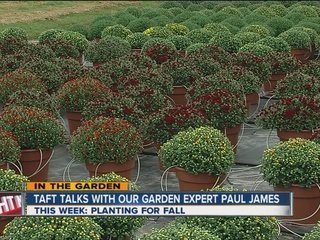 Paul James: Plant annuals or time for mums?