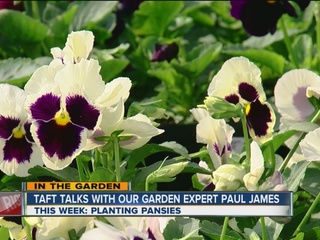 Paul James: What to plant right now!