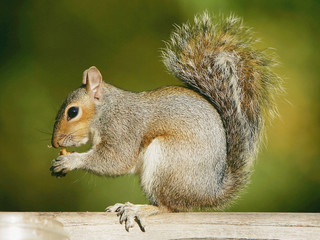 Squirrels, nuts and worms tell winter forecast?