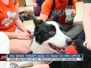 OSU sends therapy dogs to crash victim's office