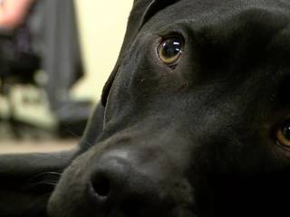 Therapy dogs help at Rogers County courthouse