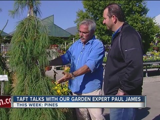 Paul James covers the rugged pine