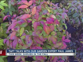Paul James covers shrubs with great fall color
