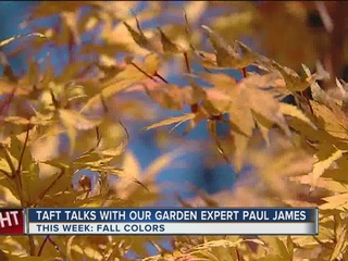 Paul James: Reasons why fall colors occur