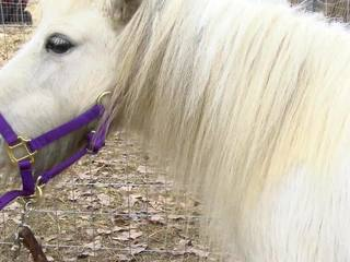 Pony attacked with bow and arrow in Gore