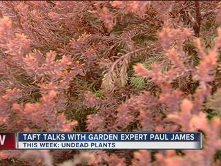Paul James: No! It's Not Dead!