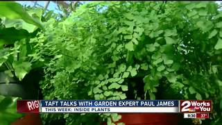 Paul James: House plants for different rooms