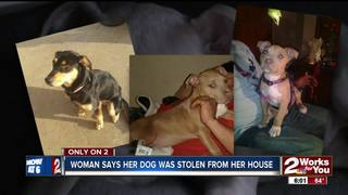 Reports of missing pets rising in neighborhood