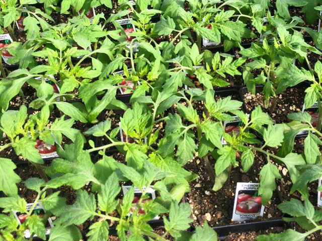 Plant a Row for the Hungry at Southwood Landscape and Garden Center in Tulsa