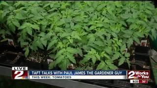 Paul James: Tomatoes