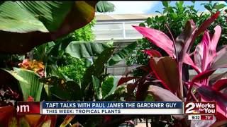 Paul James: Bringing the tropics home