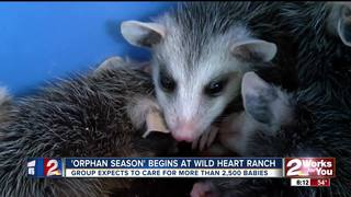 Wild Heart Ranch takes in orphaned animals
