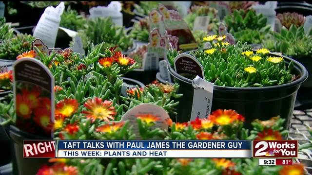In The Garden Paul James Shows Us Plants That Love The Summer Heat
