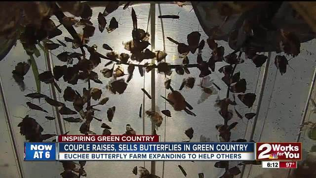 Couple raises- sells butterflies in Green Country