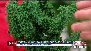 Paul James covers the popular mini-conifers