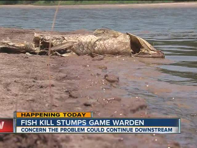 Game warden concerned about discovery of hundreds of dead for Arkansas game and fish forecast